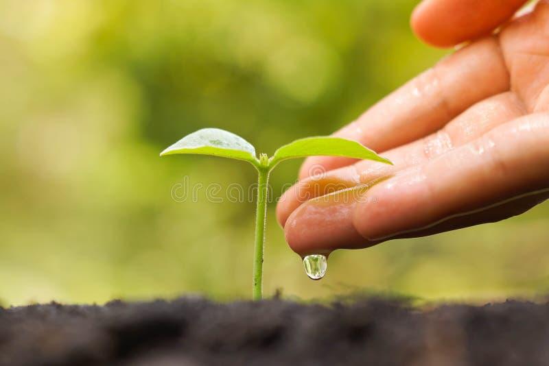 Bewässerungsanlage stockfoto