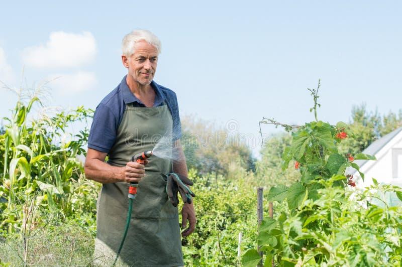 Bewässerungsanlagen des älteren Mannes stockfotos