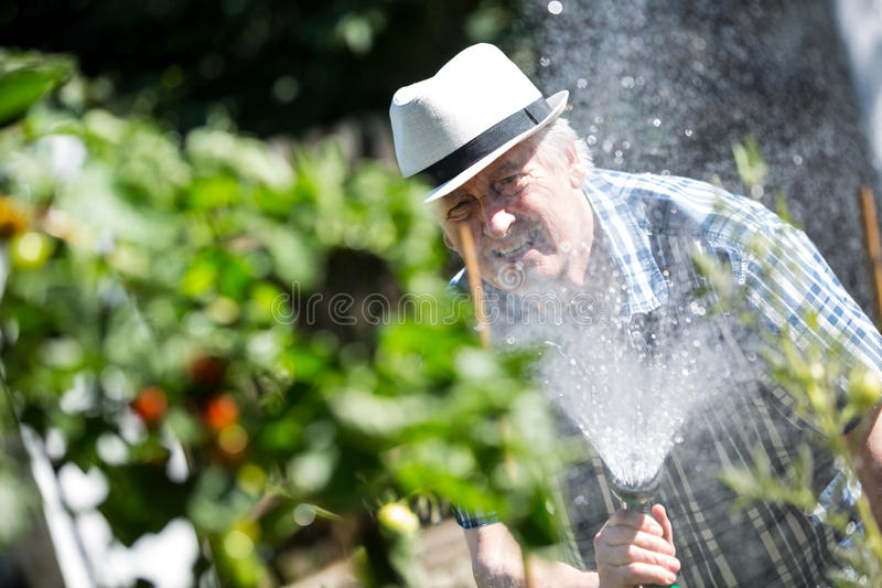 Bewässerungsanlagen des älteren Mannes mit einem Schlauch lizenzfreies stockbild