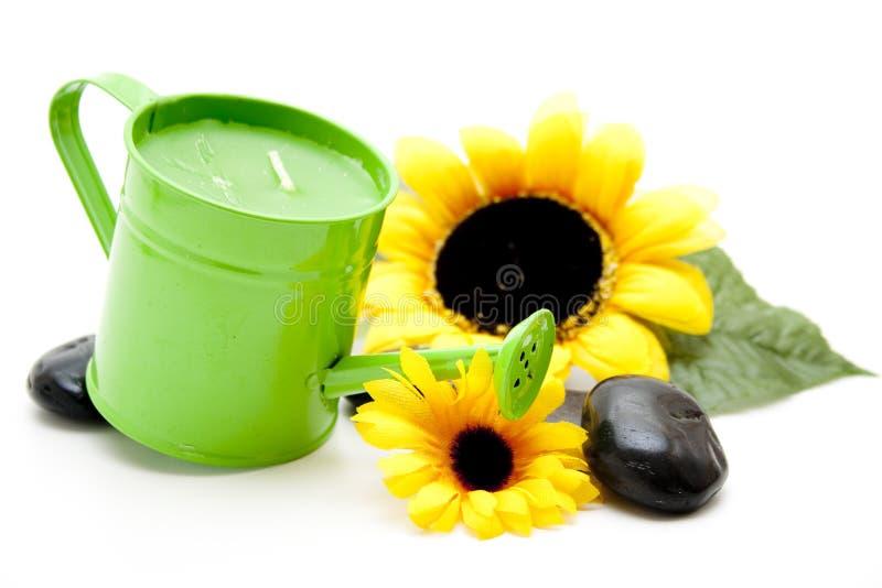 Bewässerungsdose mit Sonnenblume lizenzfreie stockbilder