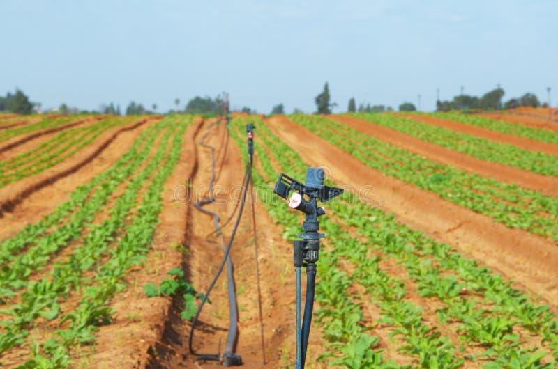 Bewässerungsernten mit Auswirkungs-Rotor-Berieselungsanlagen stockfotografie
