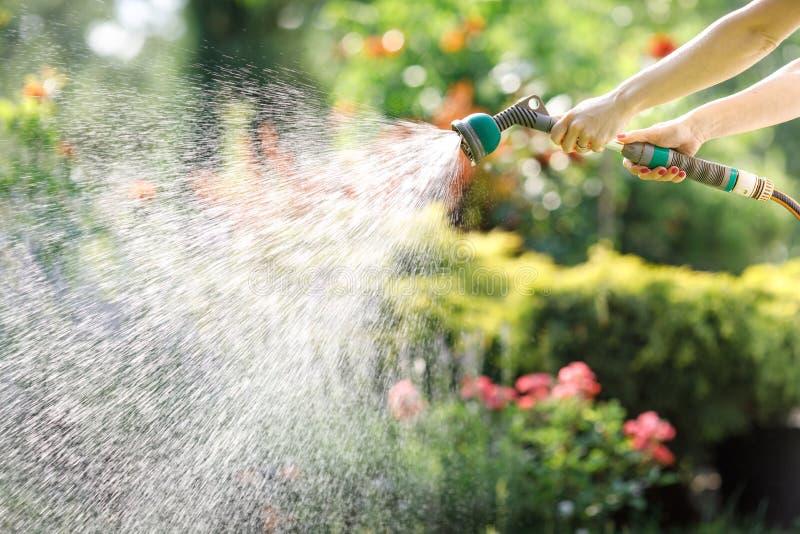 Bewässerungsgartenblumen mit Schlauch stockfoto