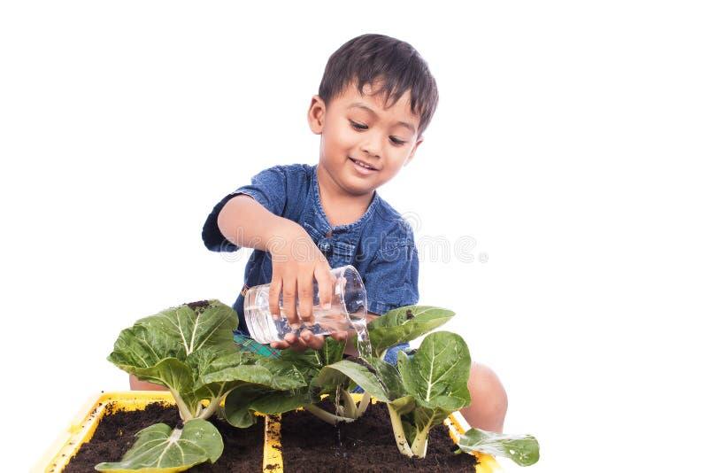 Bewässerungsgemüse des kleinen Jungen stockbilder