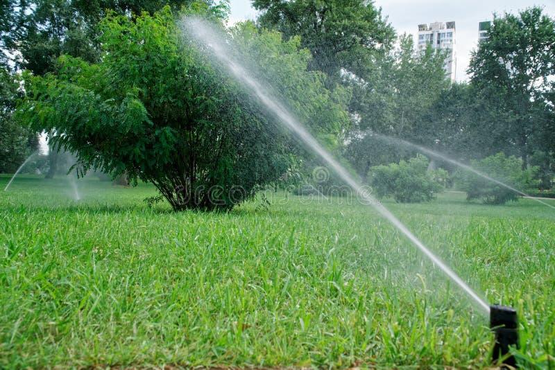 Bewässerungsgras der Sprinkleranlage im Park, Spritzenwasser lizenzfreie stockfotos