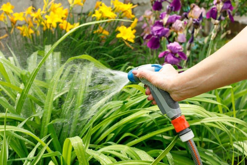 Bewässerungssträuche einer Frau mit einem Bewässerungsgewehr stockfoto