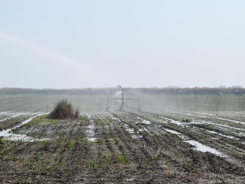 Bewässerungssystem auf dem Gebiet von Melonen Bewässerung der Felder sprenger lizenzfreie stockfotografie