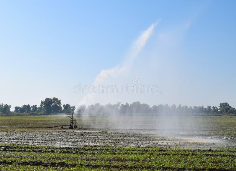 Bewässerungssystem auf dem Gebiet von Melonen Bewässerung der Felder sprenger lizenzfreie stockfotos