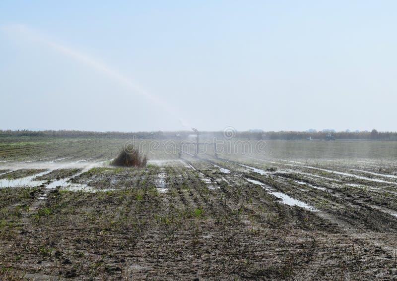 Bewässerungssystem auf dem Gebiet von Melonen Bewässerung der Felder sprenger stockfoto
