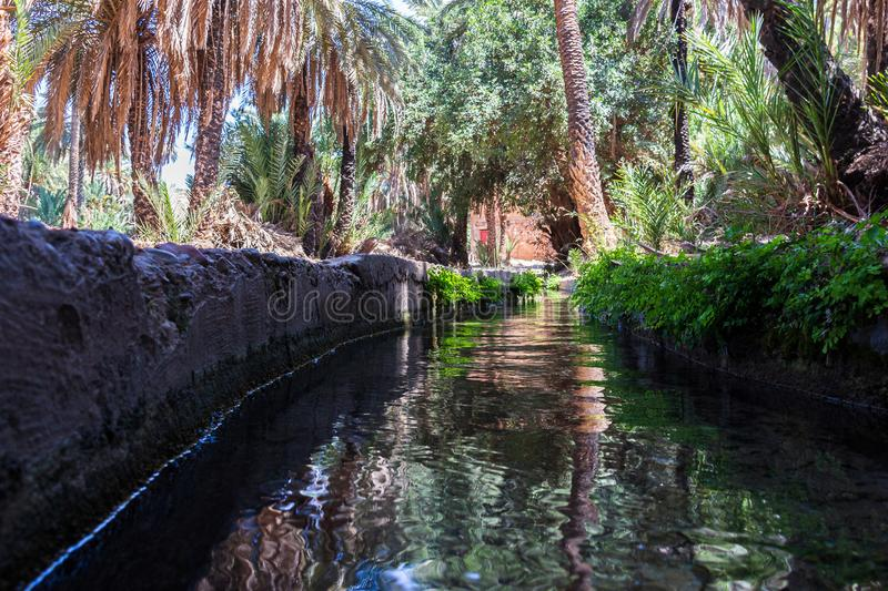 Irrigation system in the oasis of Tiout. Channel in the Oasis of Tiout in Morroco surrounded with palm trees and their reflections at the water surface royalty free stock photography