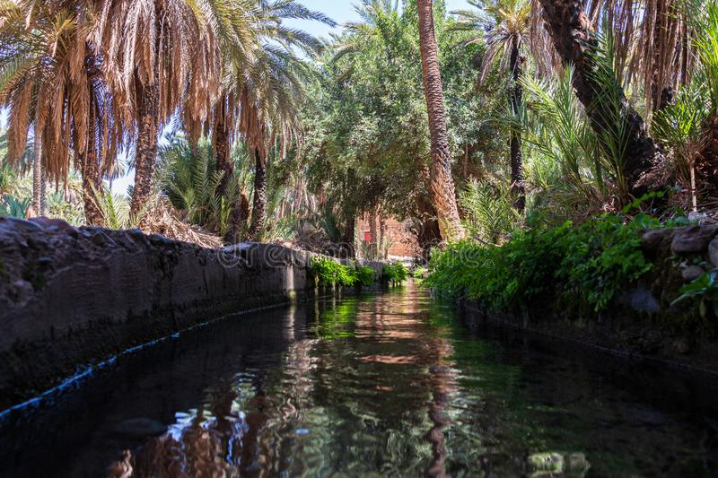 Irrigation system in the oasis of Tiout. Channel in the Oasis of Tiout in Morroco surrounded with palm trees and their reflections at the water surface stock photos