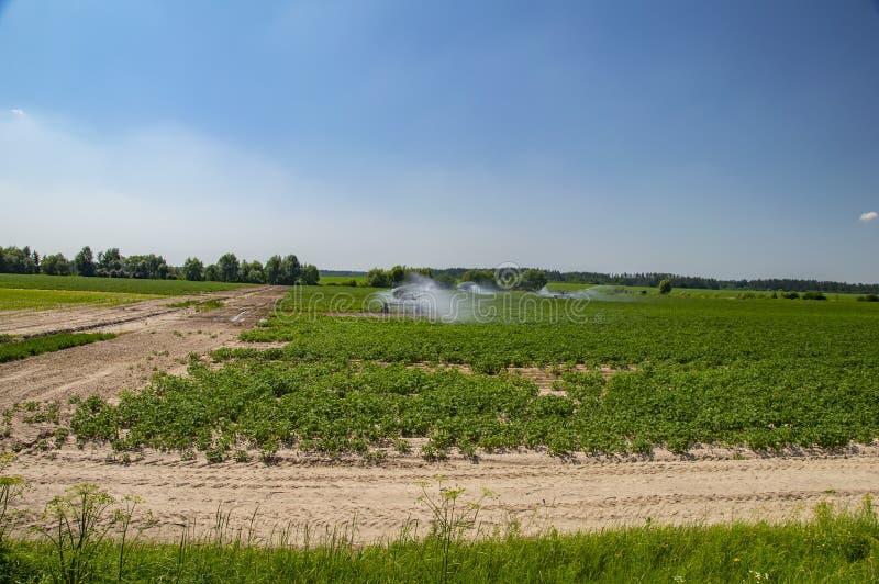 Bewässerungssystem des landwirtschaftlichen grünen Feldes gegen blauen Himmel lizenzfreie stockfotografie