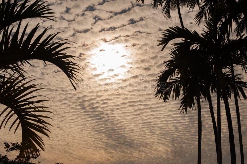 Bewölken Sie scape hinter einem Schattenbild von Palmen in der Orange stockfoto