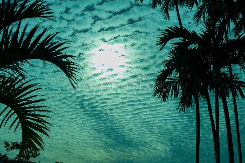 Bewölken Sie scape hinter einem Schattenbild von Palmen im Grün stockfoto