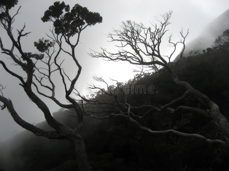 Bewölken Sie Wald stockfotografie