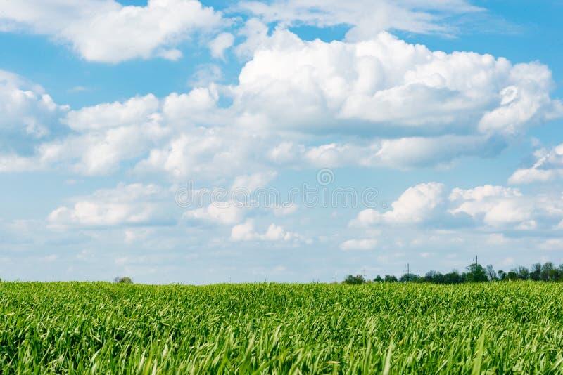 Bewölkte Landschaft der Wolke des blauen Himmels des grünen Grases des Maisfeldes lizenzfreie stockfotos