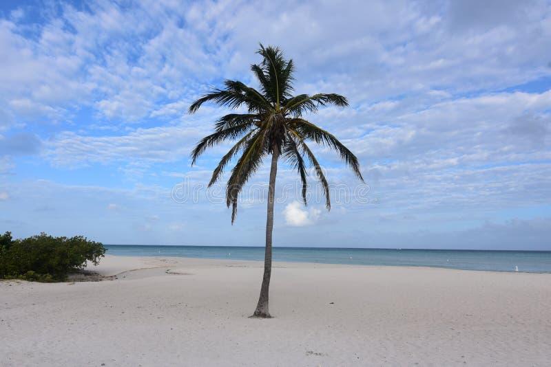 Bewölkte und blaue Himmel in Aruba mit einer Palme stockfotografie