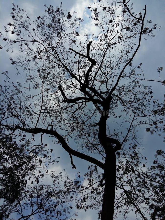 Bewölkter Baum lizenzfreie stockfotos