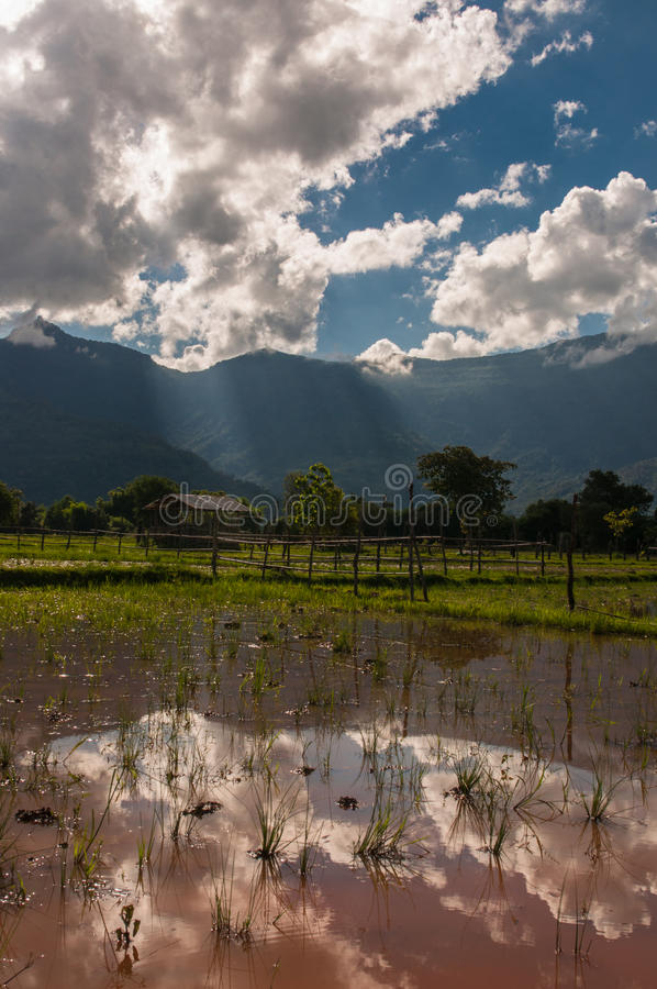 Bewölkter blauer Himmel reflektieren sich im Reis Paddy Field stockfotos