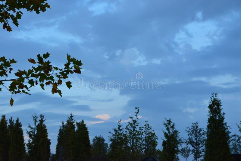 Bewölkter Himmel in der Vordergrundniederlassung mit Blättern stockfoto