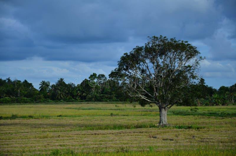 Bewölkter Himmel mit einem einzigen Baum lizenzfreie stockbilder