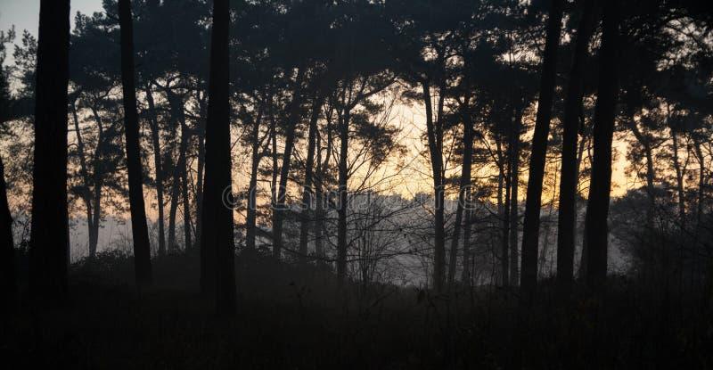 Bewölkter Waldsonnenuntergang durch die Bäume stockfotografie