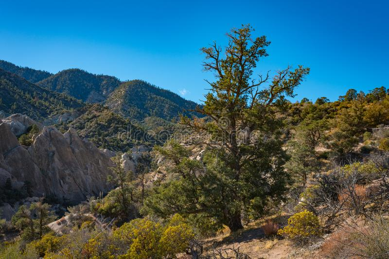 Bewaldete Hügel in der Mojave-Wüste stockfotografie