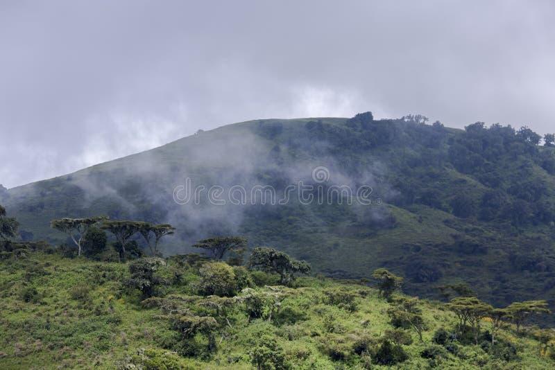 Bewaldete Hügel im Hintergrund eines stürmischen Himmels stockfotografie