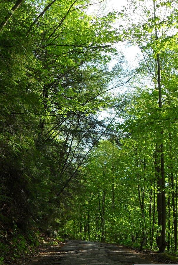 Bewaldete Landstraße in Pennsylvania lizenzfreie stockfotografie
