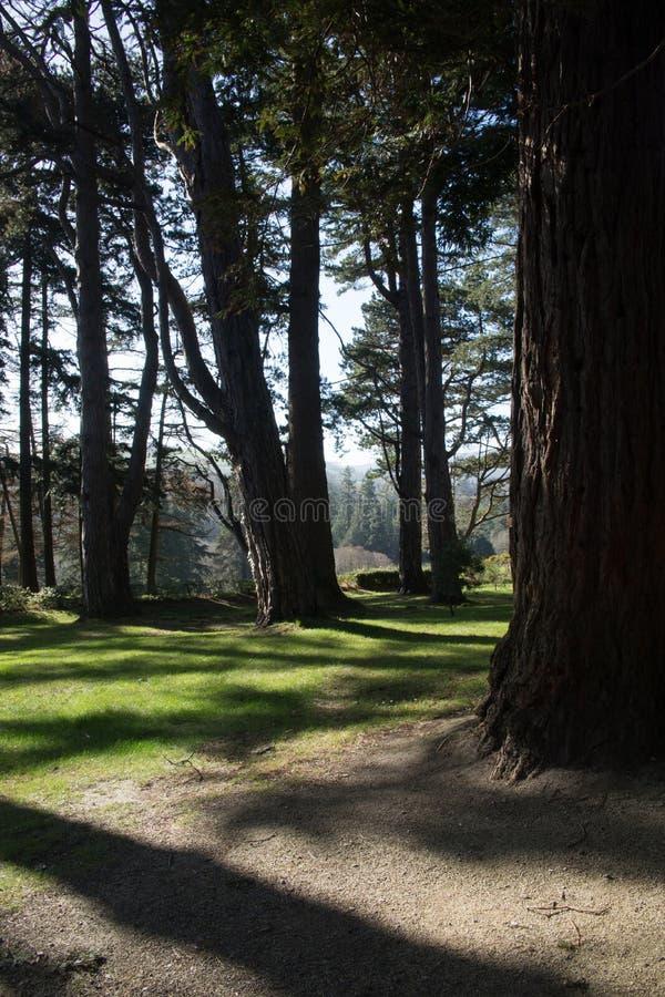 Bewaldeter Gehweg an Powerscourt-Zustand, Enniskerry, Grafschaft Wicklow, Irland lizenzfreie stockfotos