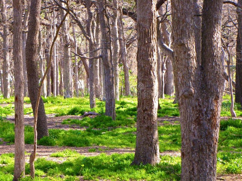 Bewaldeter Wald lizenzfreies stockbild