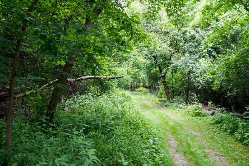 Bewaldeter Weg mit üppigem Laub lizenzfreies stockfoto