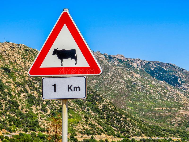 Beware Of Cows Sign stock images