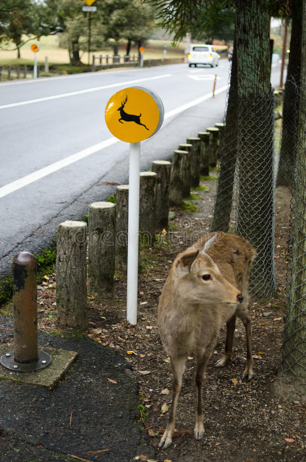 Beware The Deers Sign In Nara, Japan Royalty Free Stock Images