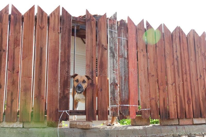 Beware do cão foto de stock royalty free