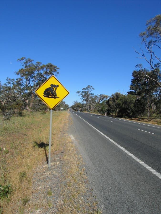 Beware do koala fotografia de stock