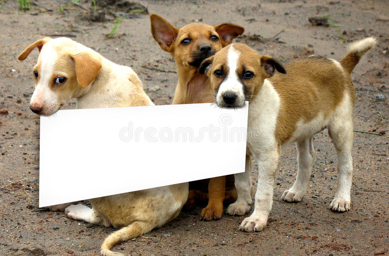 Beware of dogs. Dogs say's we protect this house stock images