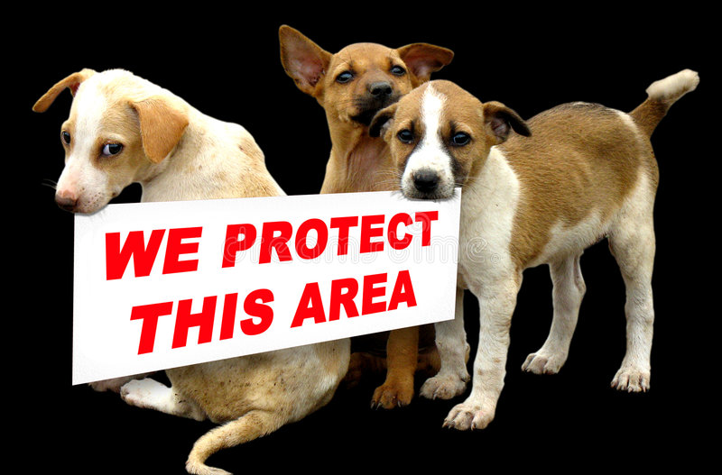 Beware of dogs. Dogs say's we protect this house