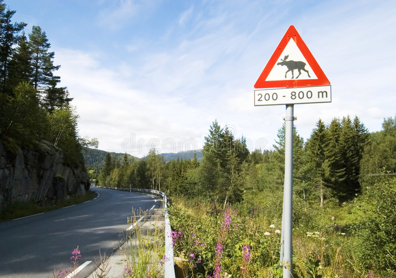 Download Beware of moose stock photo. Image of sign, warning, road - 3010328