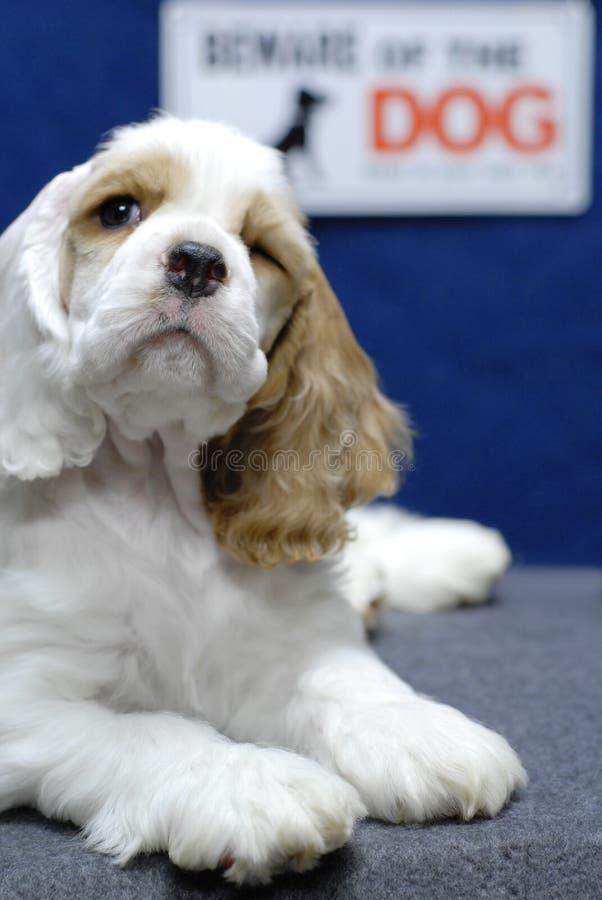 Beware van hond royalty-vrije stock afbeeldingen