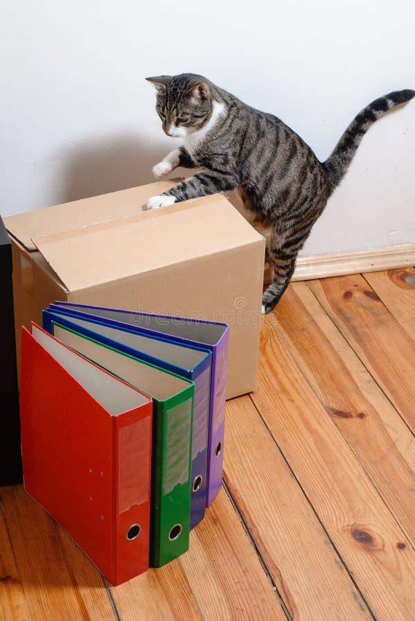 Bewegende dag - kat en kartondozen in ruimte stock fotografie