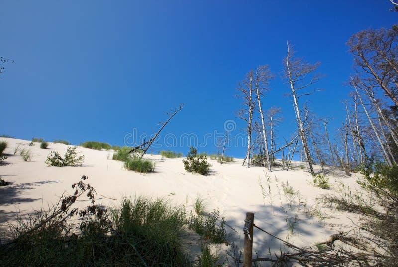 Bewegende Duinen in het Nationale Park Polen van Slowinski stock foto