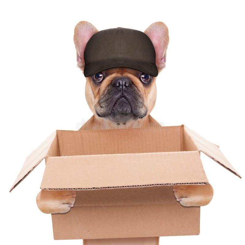 Beweglicher Kastenhund lizenzfreie stockbilder