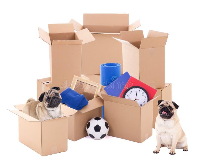Bewegliches Tageskonzept - braune Pappschachteln und Hunde an lokalisiert lizenzfreies stockbild