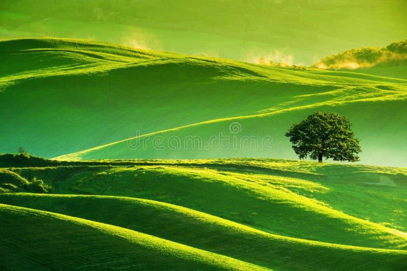 Bewegt Hügel, einsamen Baum, minimalistic Landschaft wellenartig lizenzfreie stockfotos