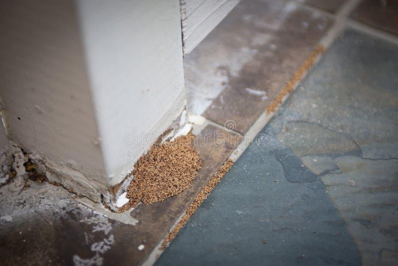 Beweis der Termiten-Plage lizenzfreie stockfotografie