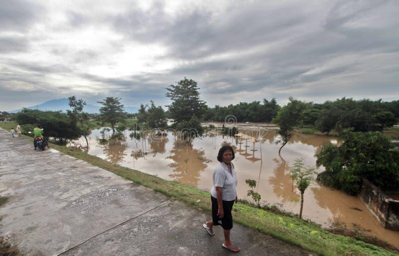 Bewohner gehen hinter den Damm im Bereich des städtischen Waldes lizenzfreies stockbild