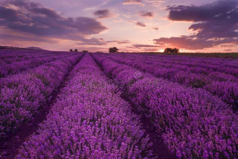 Bewolkt landschap met lavendel in de zomer begin Juni Tegenover elkaar stellende kleuren, mooie wolken, dramatische hemel royalty-vrije stock afbeelding