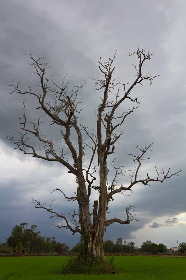 Bewolkt met een dode boom. stock foto's