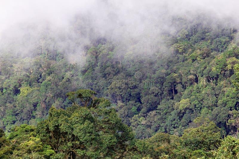 Bewolkt regenwoud stock afbeelding