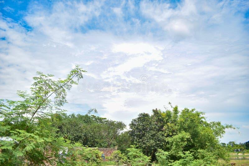 Bewolkte blauwe hemel met groene boom stock foto's